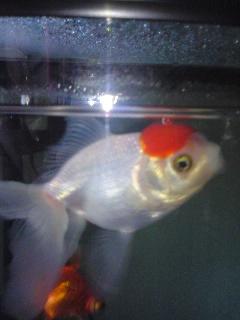 金魚p(^^)q